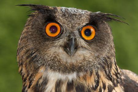 mandible: Big eyes