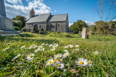 Pushing up the daisies. A bunch of daisies growing in a graveyard in front of a church on a sunny Spring Day. Wales, UK, April