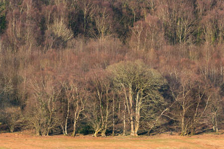 brecon beacons: Deciduous forest canopy  scenic view of the woodland edge. Brecon Beacons, Wales. February Stock Photo