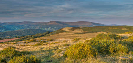 brecon beacons: Evening view over the Black Mountains from Llangynidr with flowering gorse in the foreground. Brecon Beacons, September