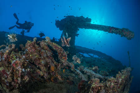 Scuba diver explores underwater wreckage of the Thistlegorm. Backlit stern artillery gun with many lionfish in the foreground. Red Sea, Egypt, November. Stock Photo