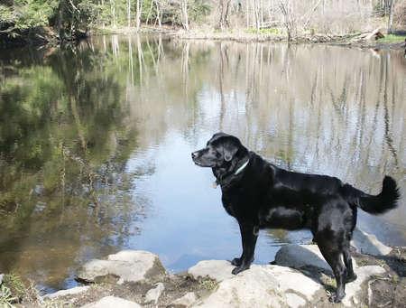 Dog Attention Imagens