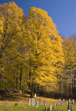 Yellow Tree photo
