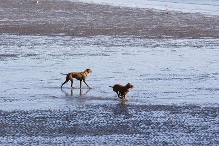 Mud Search Stock Photo - 2059777