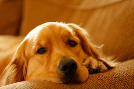 kanapa: Couch Dog