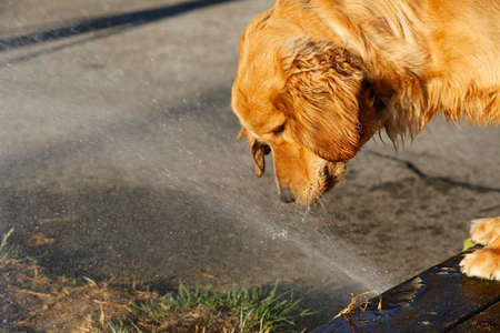 sprinkler dog stock photo picture and royalty free image image