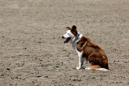 Herdershond rust Stockfoto