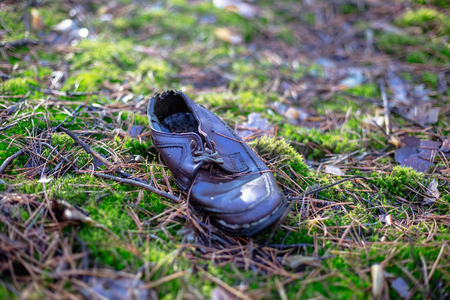 Alter verlassener einzelner Schuh im Kiefernwald Standard-Bild - 95904622