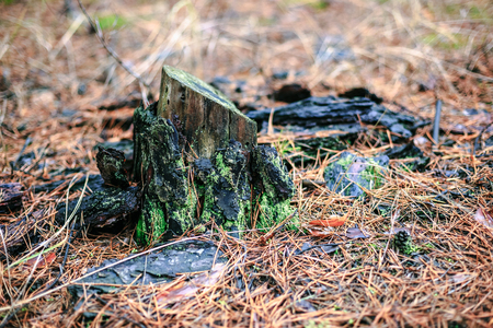 Old stump with green moss in the autumn forest