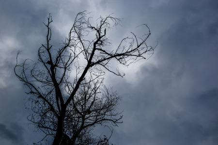 Silhouette of dead tree without leaves with the dark sky on background