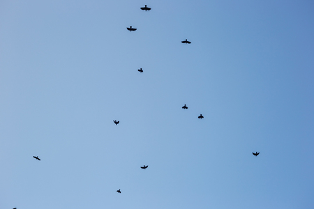Black crows in the sky.