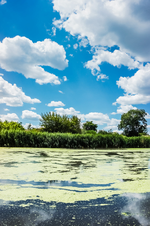 Scenic view of summer sunny river with duckweed on water surface. Nobody. Blue sky and white clouds. Stock Photo