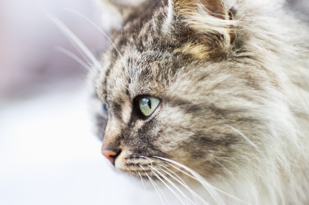 Portrait of a gray rural cat