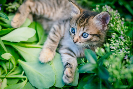 Cute tabby little kitten in the grass. Stock Photo