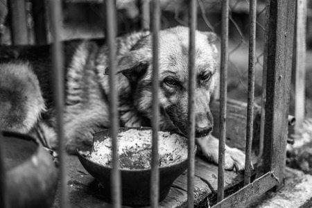 A big sad shepherd in an old aviary. Monochrome photo Foto de archivo