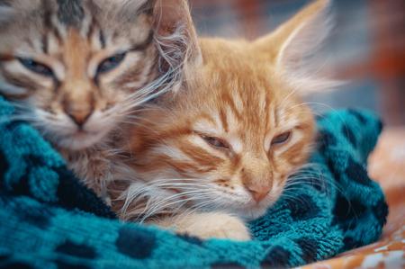 Two cute kittens in a towel.