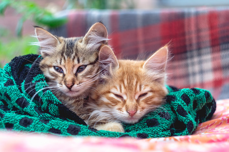 Two cute kittens in a towel. Banque d'images