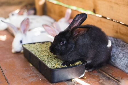 Breeding a large group of rabbits in a small shed Stock fotó