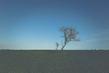 Lonely green tree in the middle of a field.