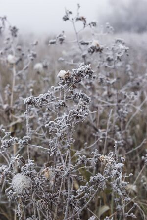 Field of grass and flowers covered with hoarfrost. Foto de archivo - 129846262
