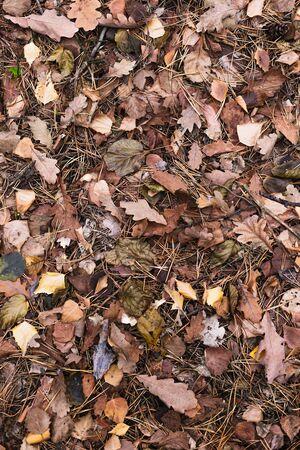 Dark leaves autumn background for design.