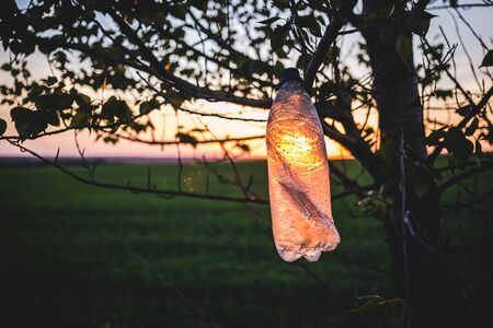 Empty plastic bottle on a tree at sunset. The concept of environmental pollution. Stockfoto - 132311473