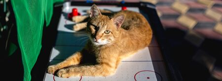 A beautiful red-haired cat lies in the sun on the surface of an air hockey game.
