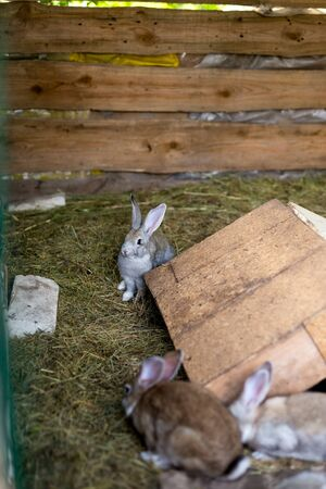 Breeding a group of rabbits in a small shed.