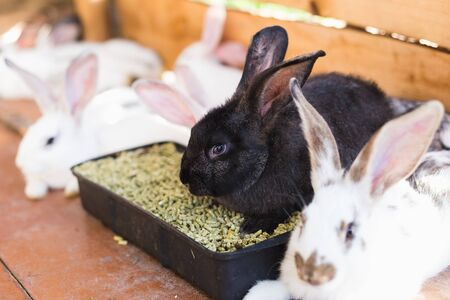 Breeding a large group of rabbits in a small shed Stok Fotoğraf