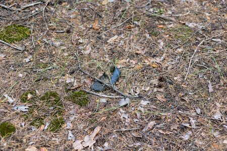 Old lost single shoe in the pine forest