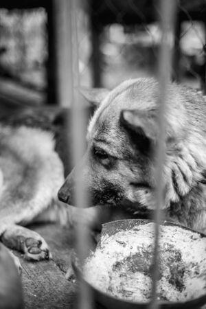A big sad shepherd in an old aviary. Monochrome photo Banco de Imagens