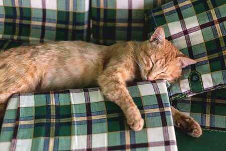 Beautiful red cat sleeps in bed, hugging a pillow