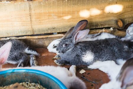 Breeding a large group of rabbits in a small shed