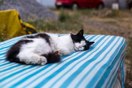 Dirty black and white rural cat lies outdoors on a striped mattress.