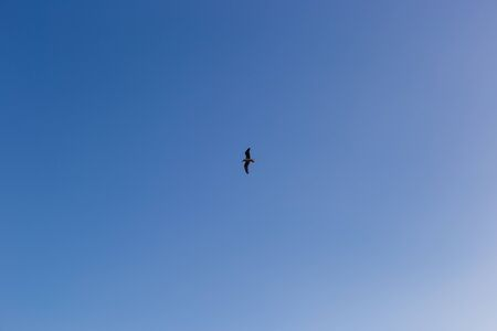Seagull on a background of blue sky.