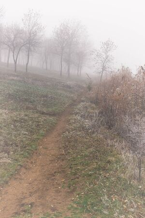 Footpath along the pond on a foggy autumn morning. Hoarfrost on plants Stockfoto