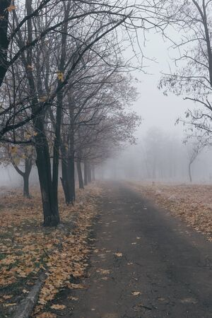 Old asphalt road in autumn park with trees in the fog.