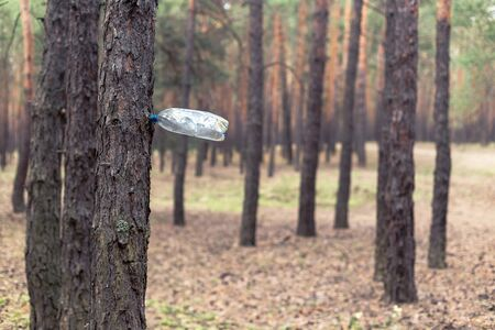Plastic bottle on the tree in the pine forest. Environmental Pollution Concept