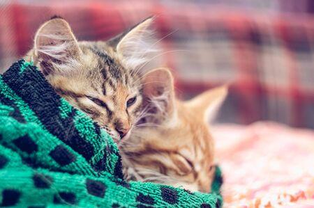 Two cute kittens in a towel. Stockfoto