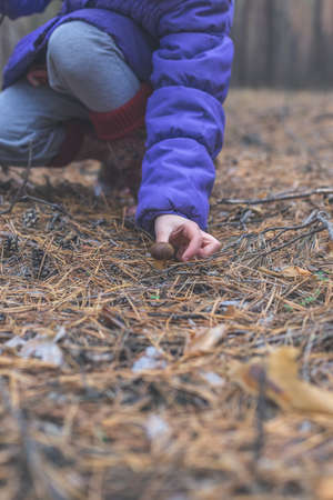 A child is trying to collect edible mushroom in the forest