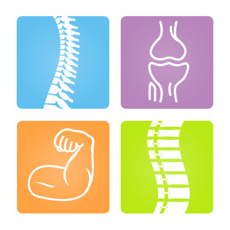musculoskeletal: 2D Vector Spinal column Musculoskeletal Image with Rounded Rectangle on White Background