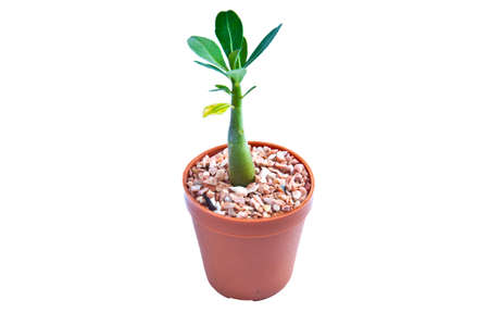 Young plant on the white backgrounds Stock Photo - 9152710