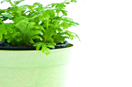 Young plant on the white backgrounds Stock Photo - 9152739