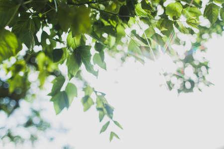 green leaves border: Green leaves border sunshine Stock Photo