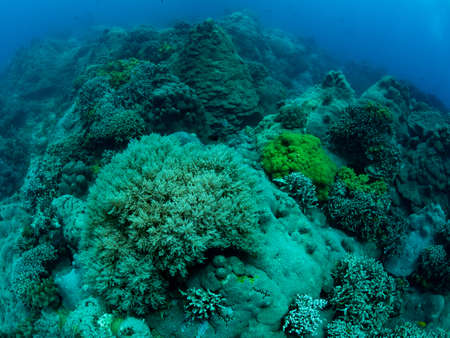 Colorful coral reef, underwater photo, Philippines.