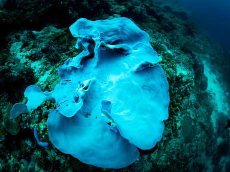 Colorful coral reef, underwater photo, Philippines. Zdjęcie Seryjne