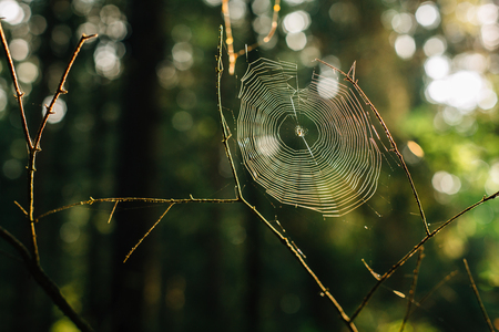 spider web in a forest