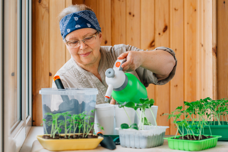 Senior female gardener watering sprouts with spray bottle. Mature woman in glasses caring for seedlings