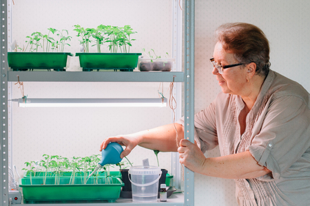 Senior female gardener watering sprouts. Mature woman in glasses caring for seedlings