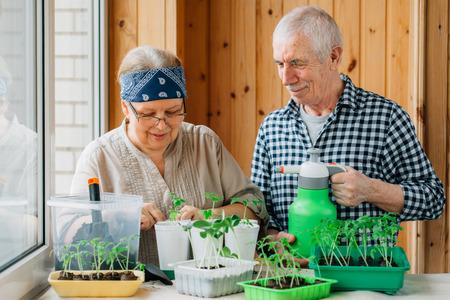 Senior couple caring seedlings. Happy mature man looking at smiling female gardener planting seedlings. 版權商用圖片